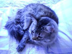 A Friend's cat
